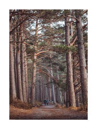 Rothiemurchas Forest