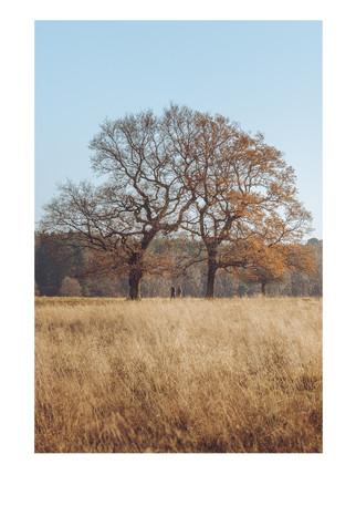 Tatton Park Trees