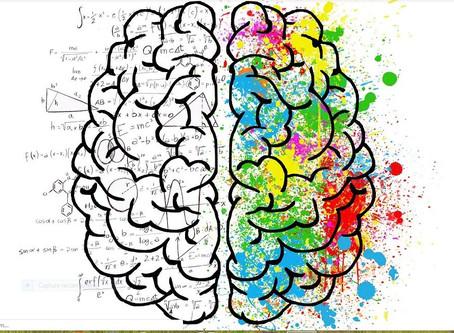 Le cerveau : son développement, son évolution au fil des années