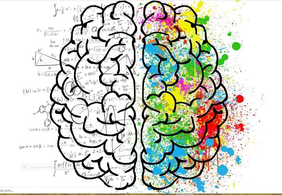 L'évolution du cerveau tout au long de la vie.