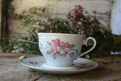 Tognana Royal  - Cup of Vintage