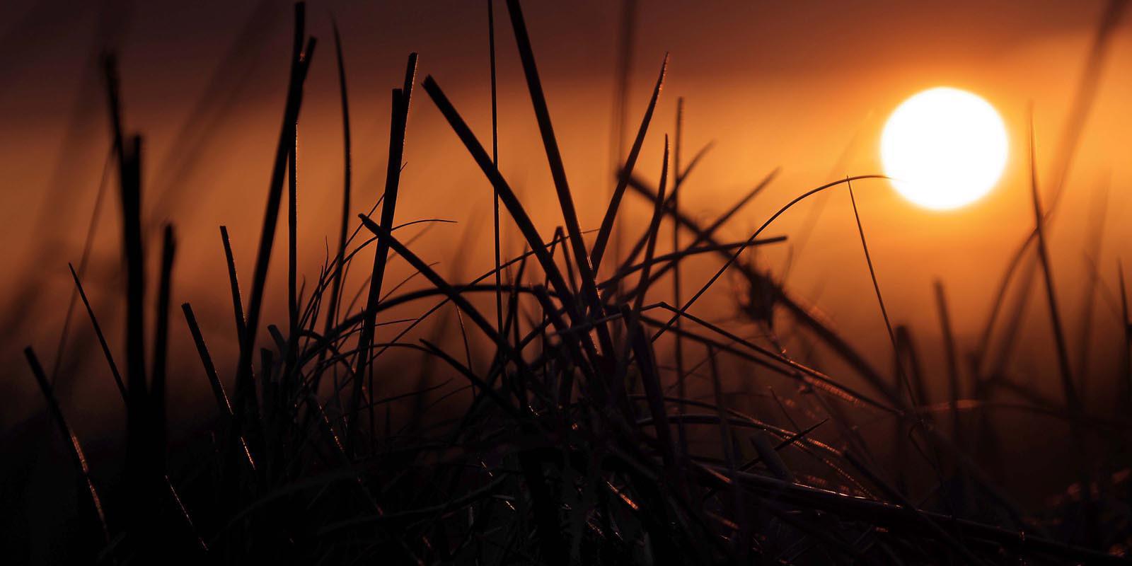 'Last Of The Light' by Michelle Smyth (6 marks)  -  Westcourt Camera Club