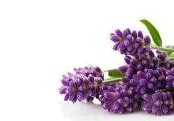 ab purple flowers