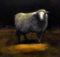 Hebridean Sheep on the Moors
