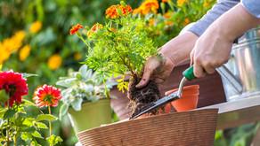 Cultivo de jardim vertical