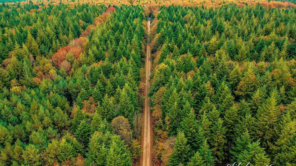 forêt de  Locoal-Mendon  Bretagne Morbihan