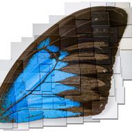 3f blue wing mergedredodrop shadowmerged