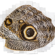 2f new layered owl smaller merged -2016-