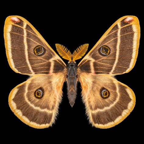 flipped saturn moth square-Edit-Edit40x4