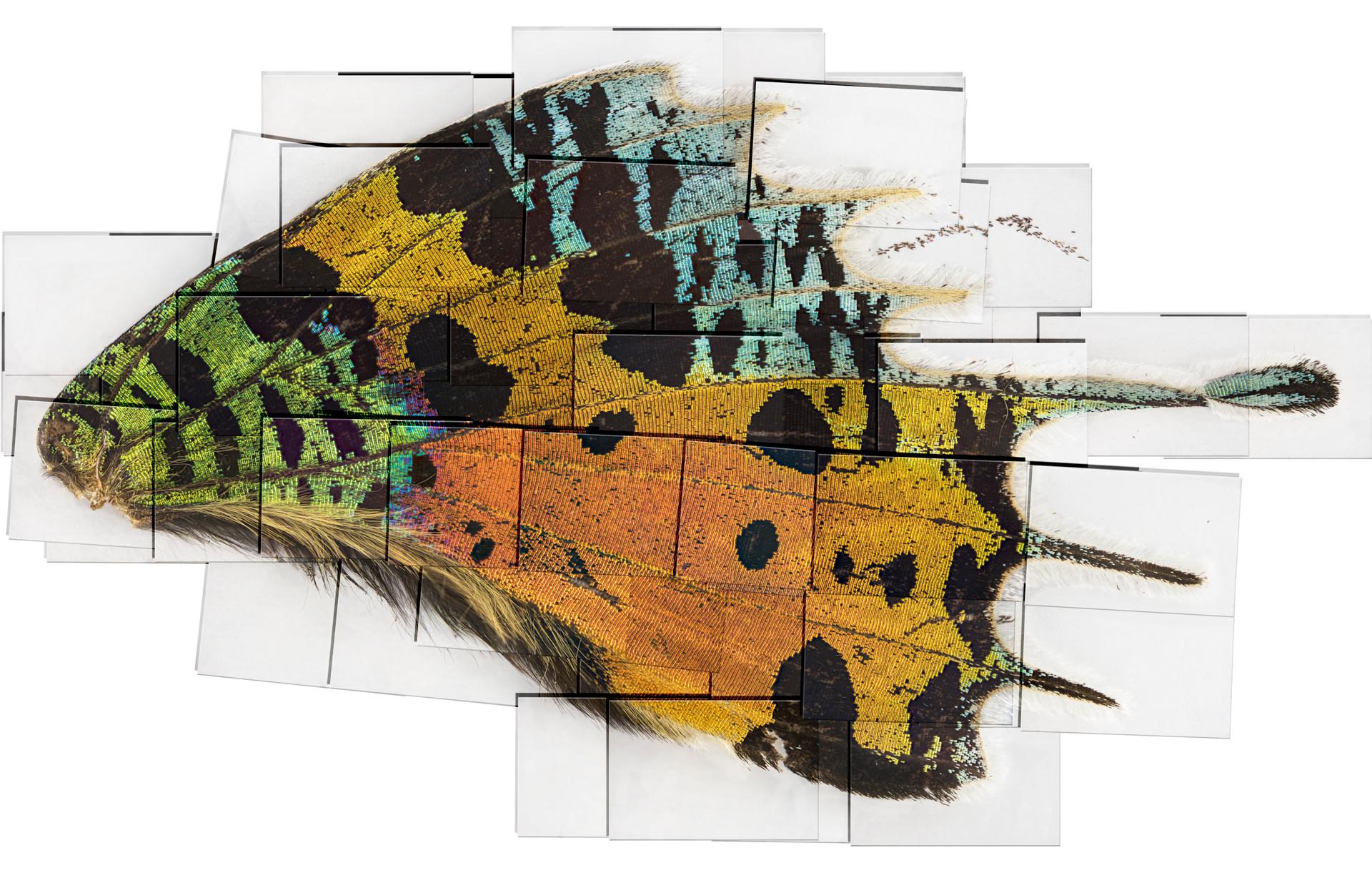 4f merged sunset moth tlighten testbette