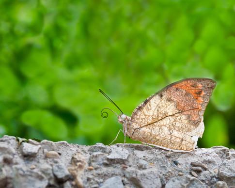 8 Nature-17.jpg