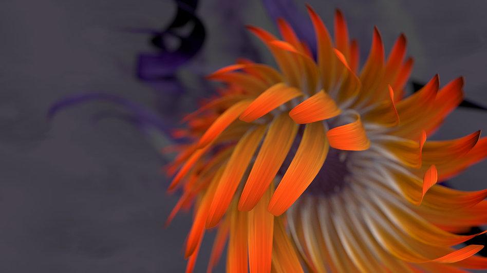 3D model, cinema 4d, Motion graphics, cinmatic, flower cgi, Angela Gigica