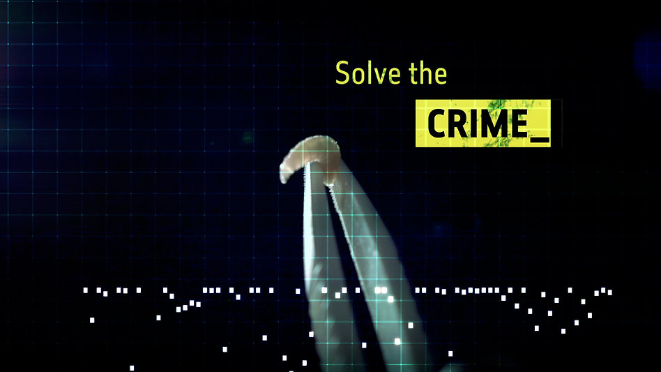 crime live event, motion graphics, London, Angela Gigica, designer,evidence, detective drama