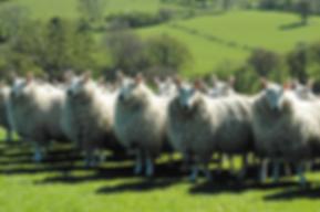 Why wool carpet?