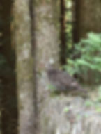 grouse mt woodside.fb.wl.JPG