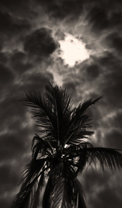 Paradise Storm |  Sarasota FL