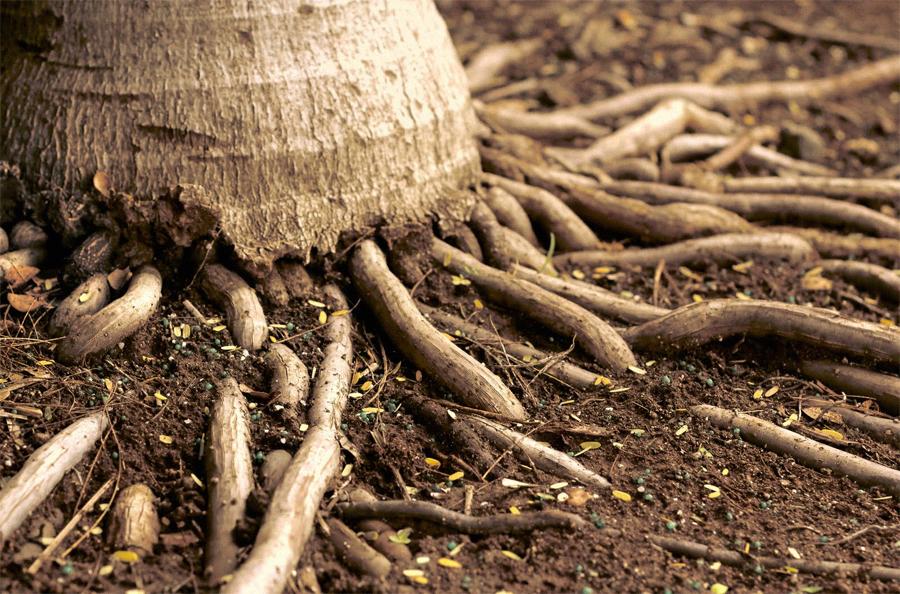 Roots  |  Sarasota FL