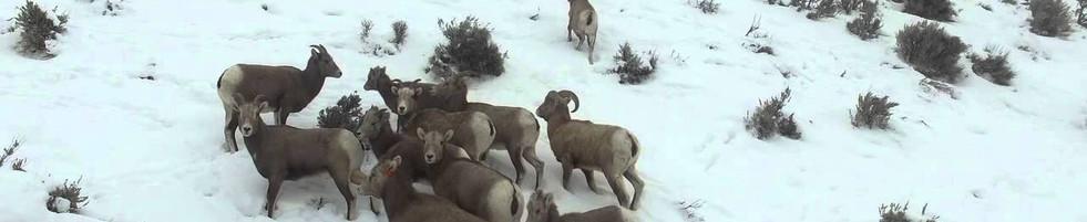 Wildlife Managment