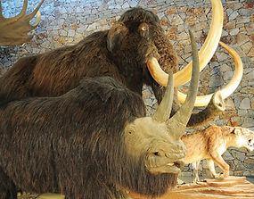 Musée préhistoire de Quinson