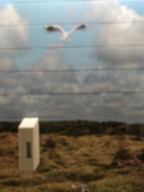 Curating Seagulls 1.jpg