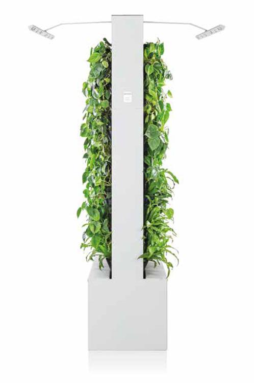 Senaste innovationens växtvägg med luftrening