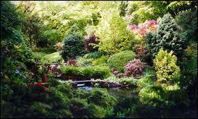 forest garden.jpg