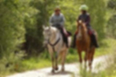 images horse.jpg