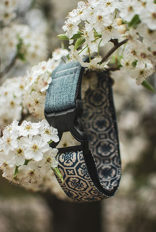denim and blue and white dog collar hangs from a white flowered branch