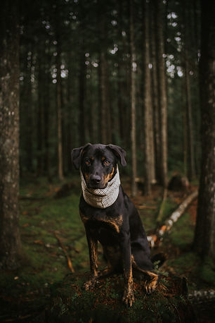 black and brown dog wearing a beige scarf looks at camera while sitting in a forest