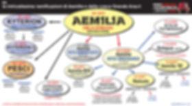 Aemilia icberti 18519 54.jpg