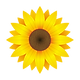 Sunflower-Web.png