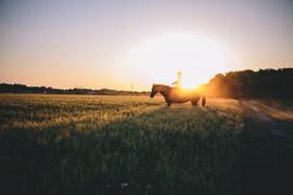 evening-horse-rides-JXHBG5V.jpg