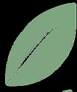 Lifehouse Leaf
