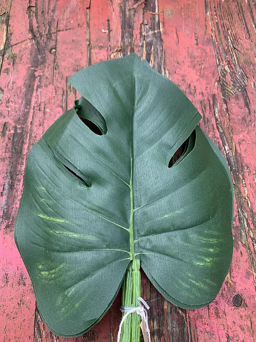 6 cheese plant leafs