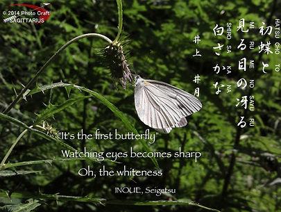 俳句写真#4