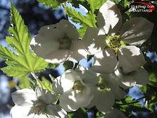 白い花(不明) #1