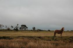 Wild pony on Bodmin Moor