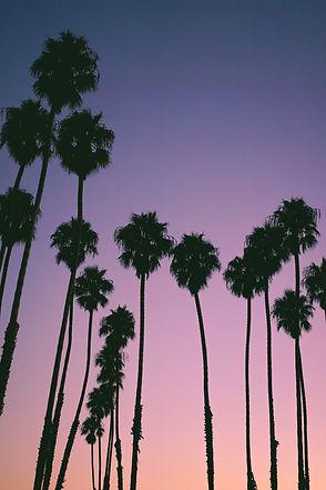 Hawaii Palm Silhouette