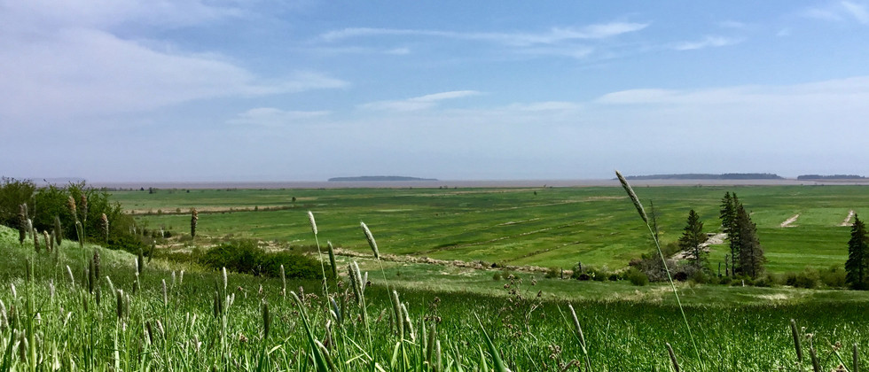 the marsh.jpeg