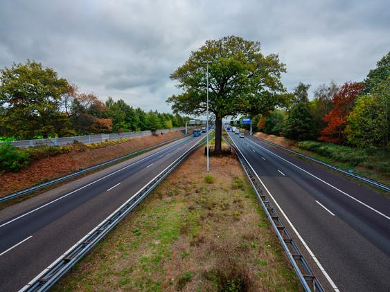 De Troeteleik tussen de A58 voor Tilburg staat zijn mannetje.