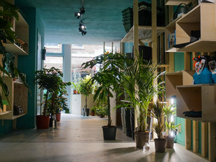 Nieuwe plantenzaak in Rotterdam: Marvy Green!