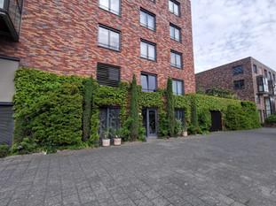 De meest uitbundige geveltuin vind je in Rotterdam-zuid!
