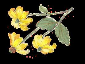 Geel blomme.PNG