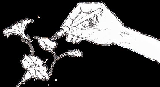 Hand en blomme.PNG