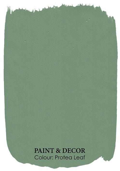 Protea Leaf