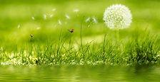 Classe_découvertes_faune_flore_printemps