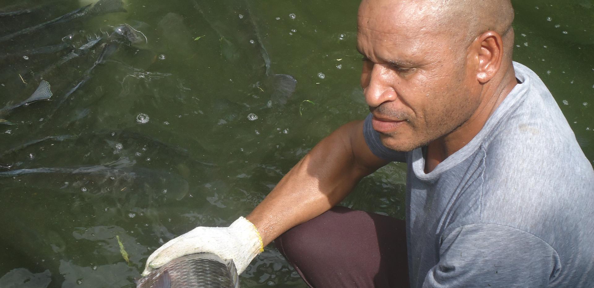 Tilapia Successfully raised in Aquacultu