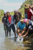 Fisheries Minister restocks Fish into Enga Rivers _.JPG
