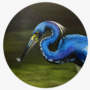 Tri Colored Heron - FOR SALE