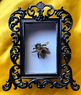 Carpenter Bee Shadow Box - 2020